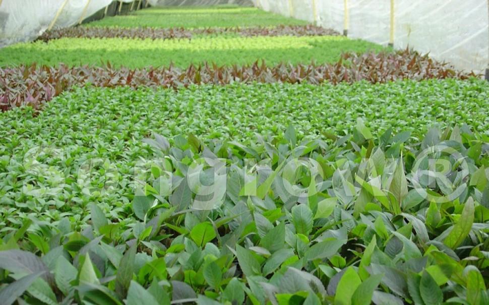 groen34 veld potplanten.jpg