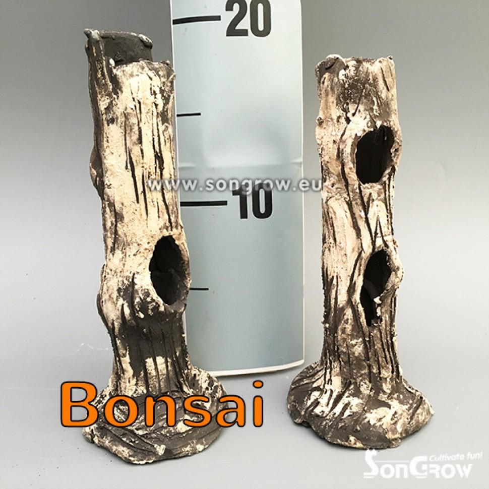 4704 Bonsai.jpg